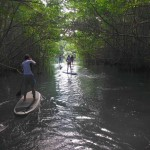 location-standuppaddle-guadeloupe (4)
